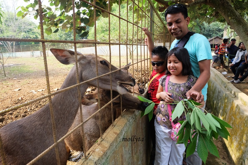 Memberi makan rusa di Kebun Binatang Medan