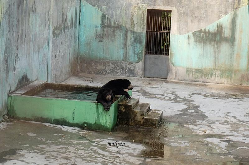 Beruang di Kebun Binatang Medan