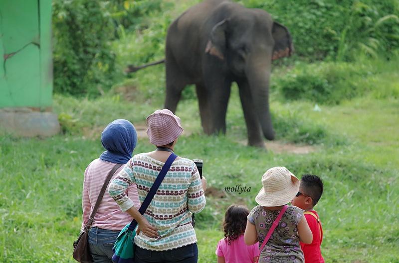 Gajah di Kebun Binatang Medan