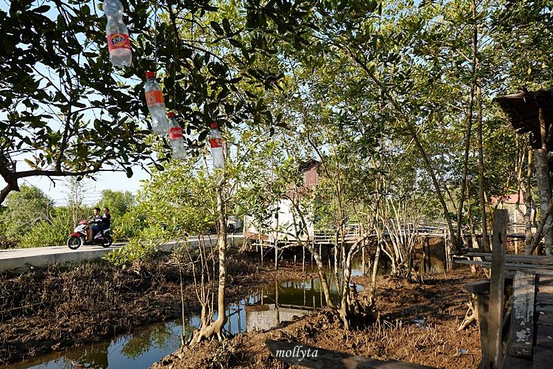 Mangrove di Gebang