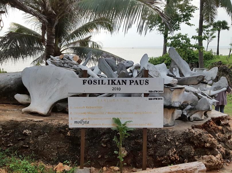 Fosil ikan paus di Pantai Ropet Giliyang