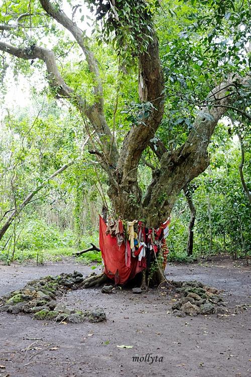 Patilasan Raden Segoro di Hutan Kera Nepa Madura