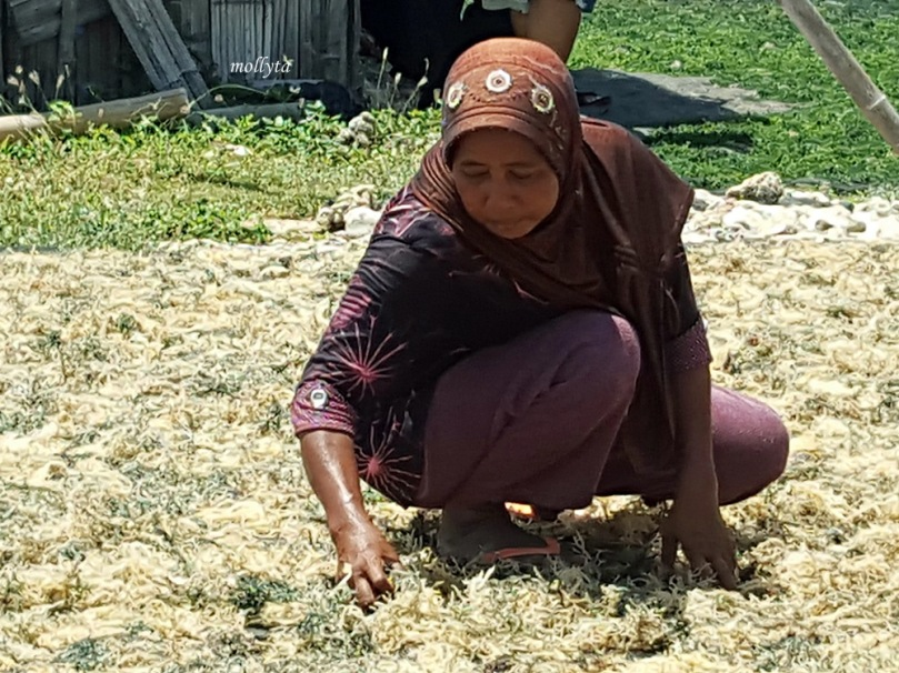 Petani pengolahan rumput laut di Sumenep Madura
