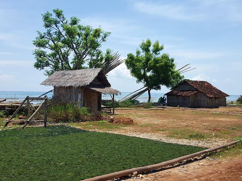 Pengolahan rumput laut di Sumenep Madura