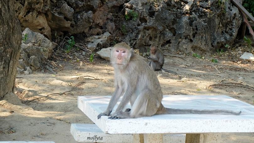 Monyet di sekitar Khao Luang Cave Phetchaburi Thailand