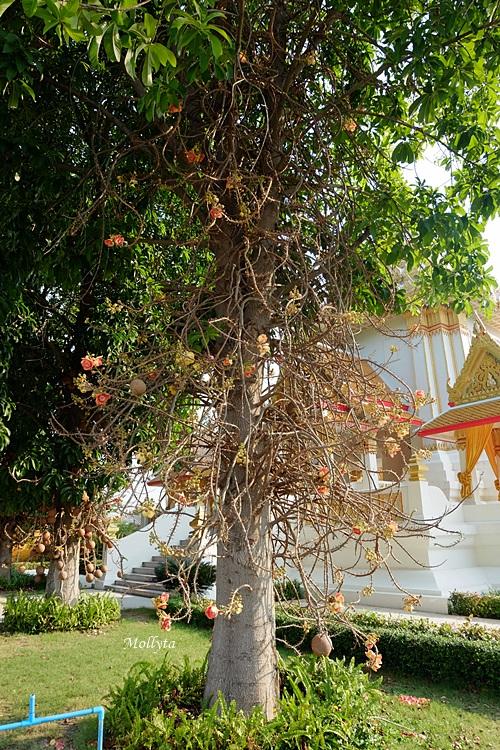 pohon ajaib di kompleks Wat Huay Mongkol Hua Hin