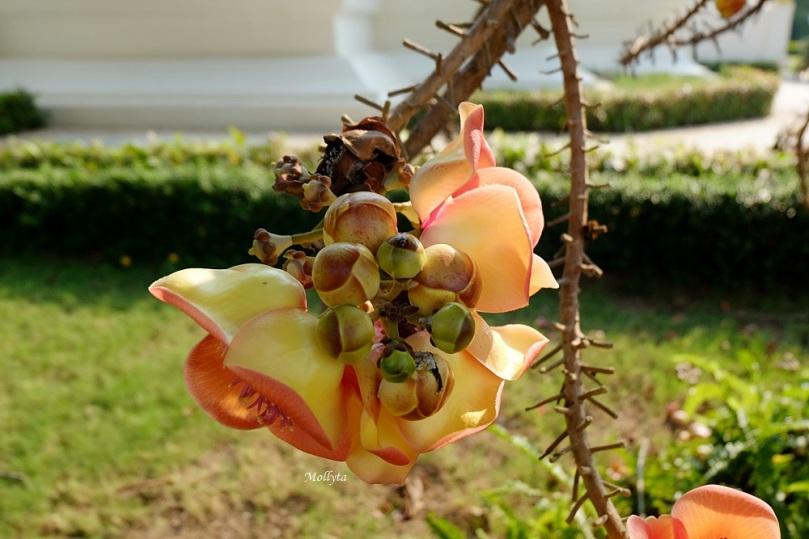 Bunga secara ajaib keluar dari batang pohon