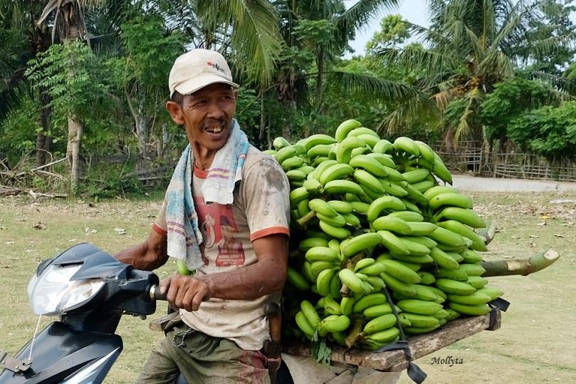 Tanaman pisang di Sebesi