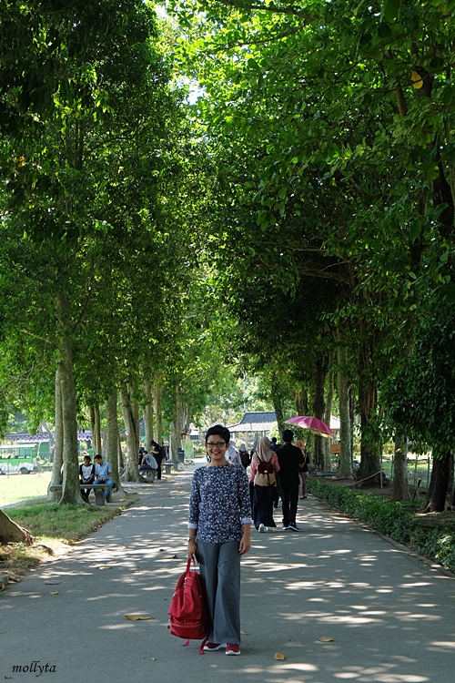 Pohon rindang di kompleks candi Prambanan