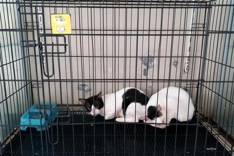 Menitipkan kucing di pet hotel