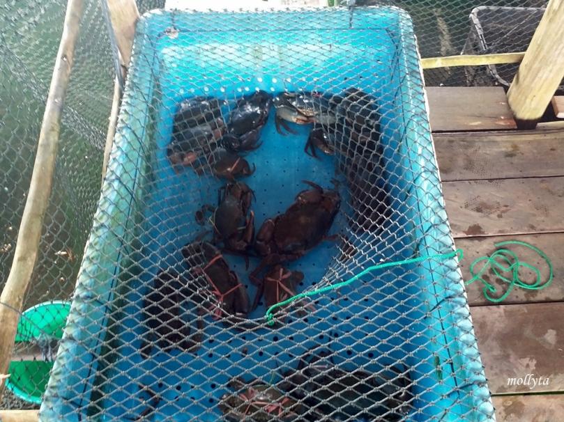 Kepiting di Restoran Kopak Jaya 007