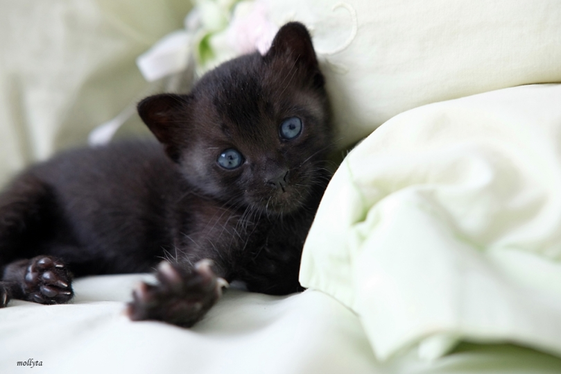 Bayi kucing Tamtam